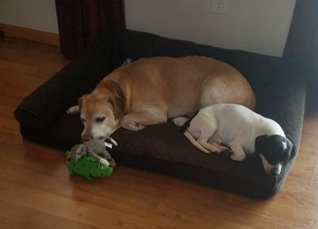 Supplied Photo: Two Dogs Sleeping on Dog Beg